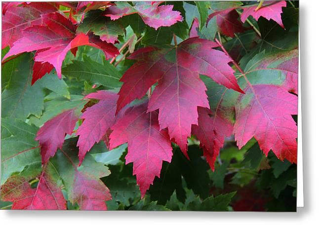 Painted Leaves Greeting Card