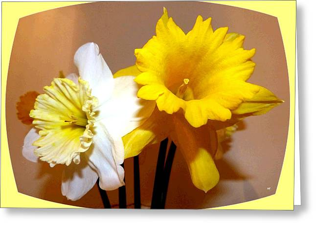 Painted Okanagan Daffodils Greeting Card by Will Borden