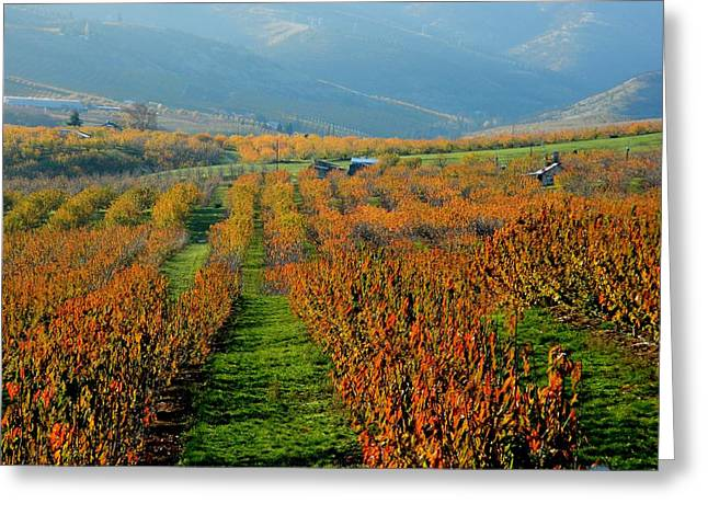 Painted Orchard Greeting Card