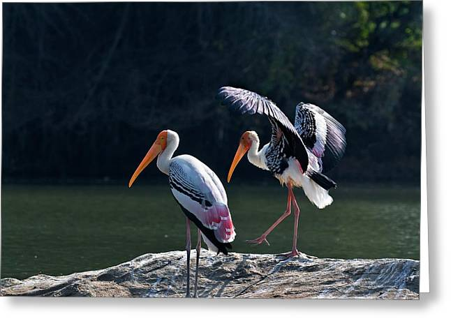 Painted Storks Greeting Card by K Jayaram