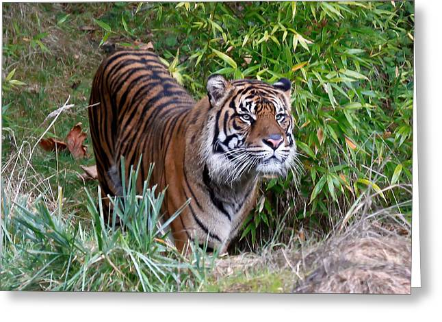 Jungle Tiger II Greeting Card by Athena Mckinzie