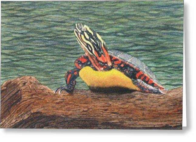 Painted Turtle Baby Greeting Card by Sharon Farber