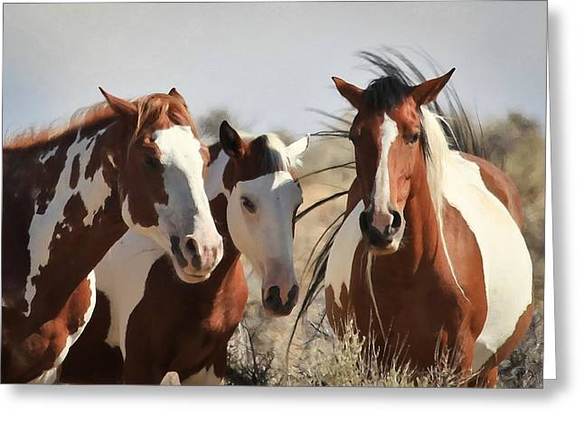 Painted Wild Horses Greeting Card by Athena Mckinzie