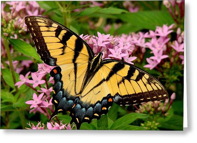 Painted Wings Greeting Card by Rodney Lee Williams