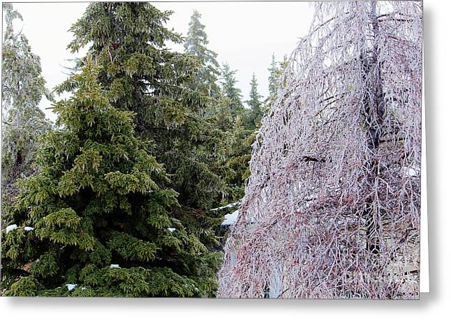 Painted With The Same Brush - Ice Storm Greeting Card by Barbara Griffin