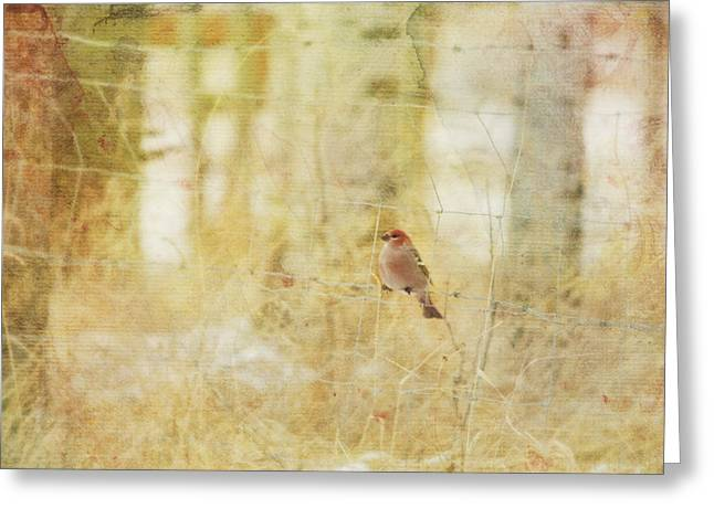 Painterly Image Of A Male Pine Grosbeak Greeting Card by Roberta Murray