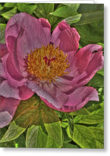 Painterly Peony Greeting Card