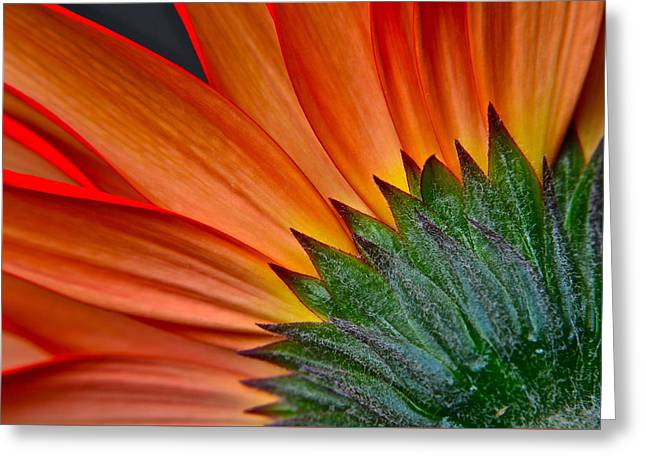 Painters Brush Greeting Card by Frozen in Time Fine Art Photography