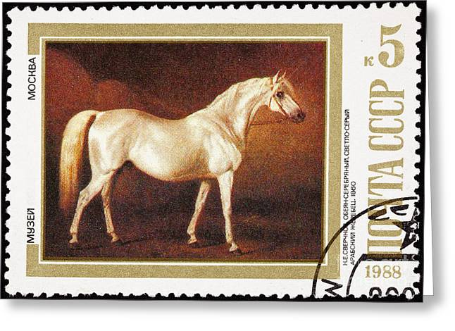 Painting Of An Arabian Stallion By Nikolai Sverchkov Greeting Card by Jim Pruitt