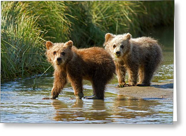 Pair Of Cubs Greeting Card