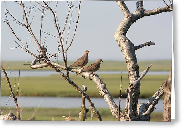 Pair Of Doves Greeting Card by Jim Gillen