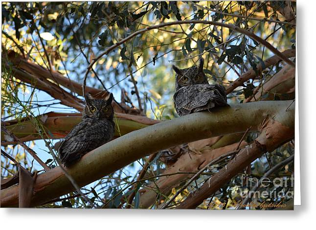 Pair Of Great Horned Owls Greeting Card
