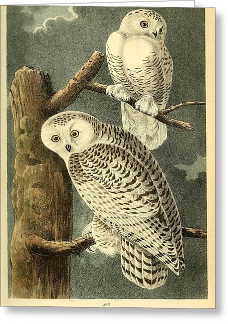 Pair Of Snowy Owls Greeting Card by Philip Ralley