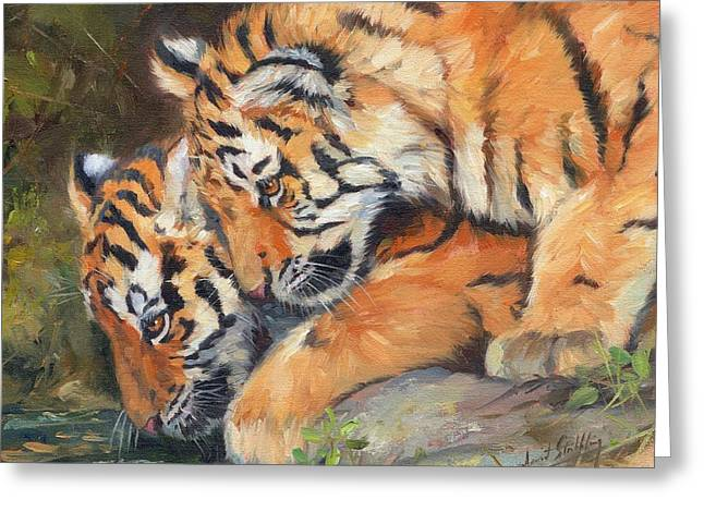 Pair Of Tiger Cubs Greeting Card by David Stribbling