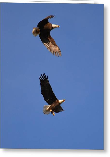 Pairs In Flight And Life Greeting Card