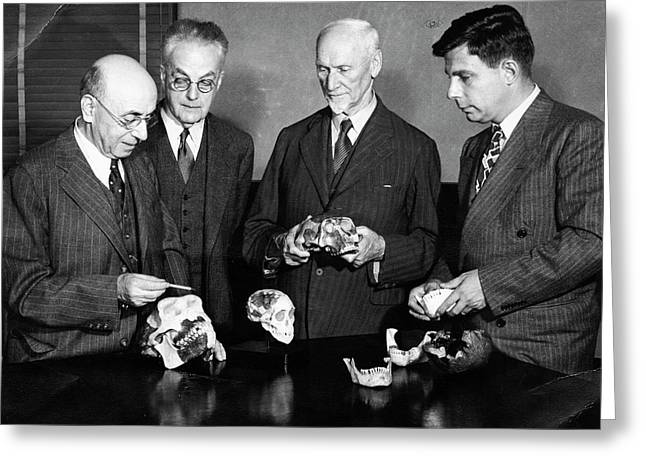 Palaeontologists Examining Skulls Greeting Card