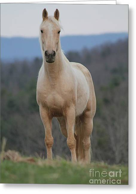 Greeting Card featuring the photograph Palamino Horse by Laurinda Bowling