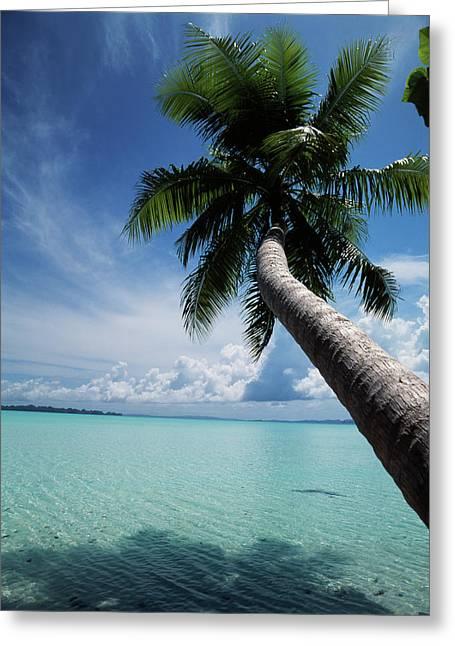 Palau, Micronesia, Palm Tree At Palau Greeting Card by Stuart Westmorland