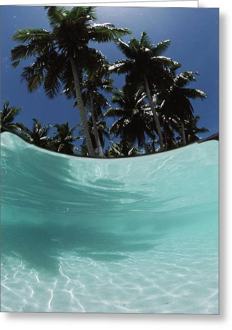 Palau, View Of Islands Tree, World Greeting Card by Stuart Westmorland