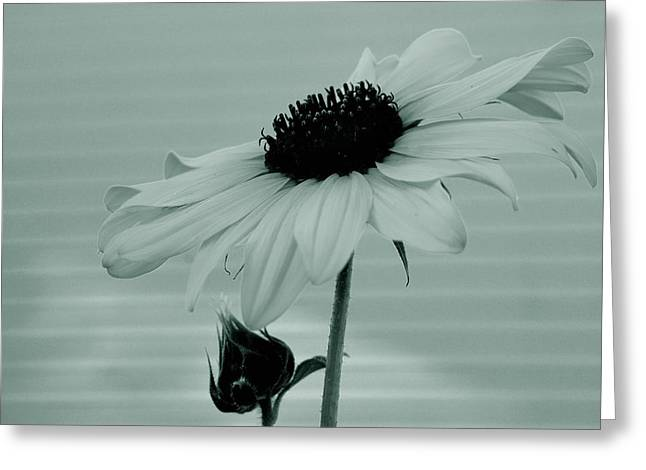 Pale Beauty Greeting Card by Steven Milner