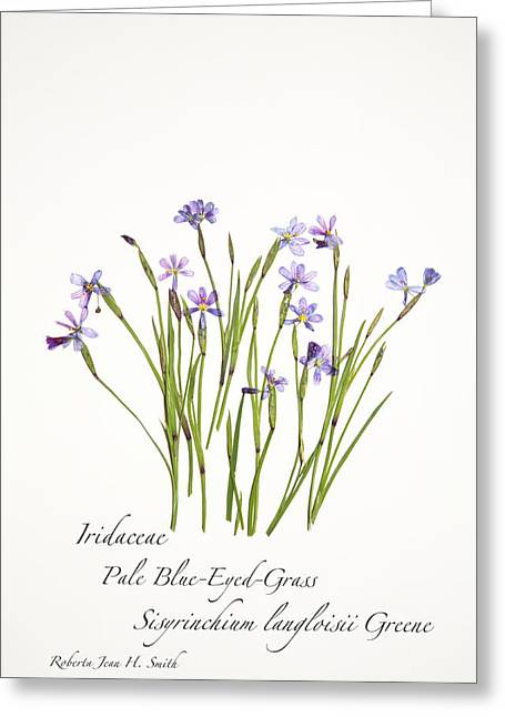 Pale Blue-eyed Grass Greeting Card