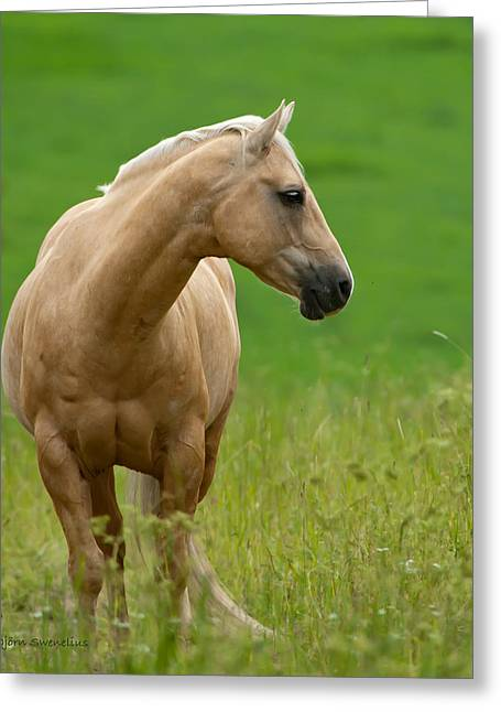 Pale Brown Horse Greeting Card