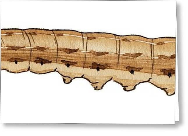 Pale Mottled Willow Caterpillar Greeting Card by Mikkel Juul Jensen