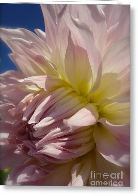 Pale Petals In Pink #5 Greeting Card