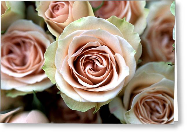 Pale Pink Roses Greeting Card by Kathy Yates