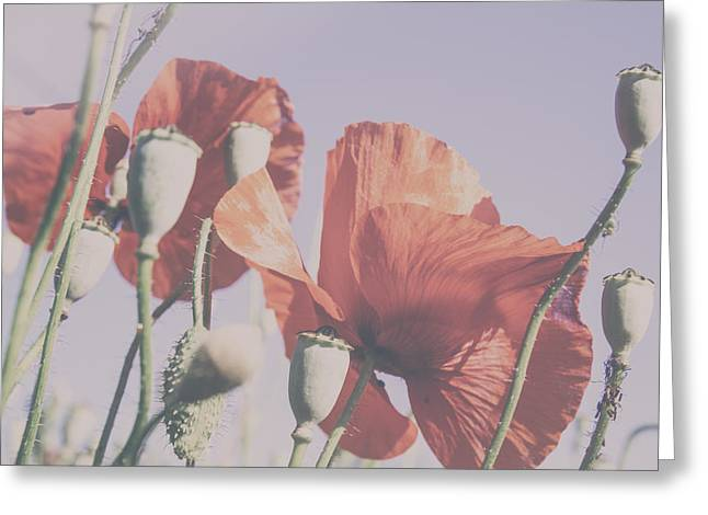 Pale Poppy Day Greeting Card by Georgia Fowler