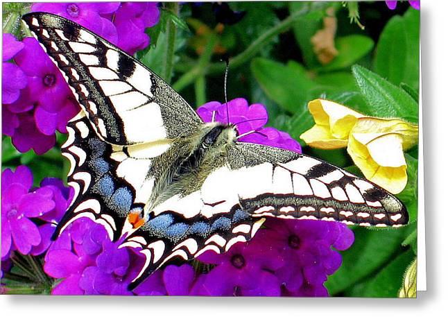 Pale Swallowtail Greeting Card