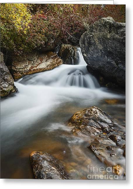 Palisades Creek In Idaho Greeting Card by Vishwanath Bhat