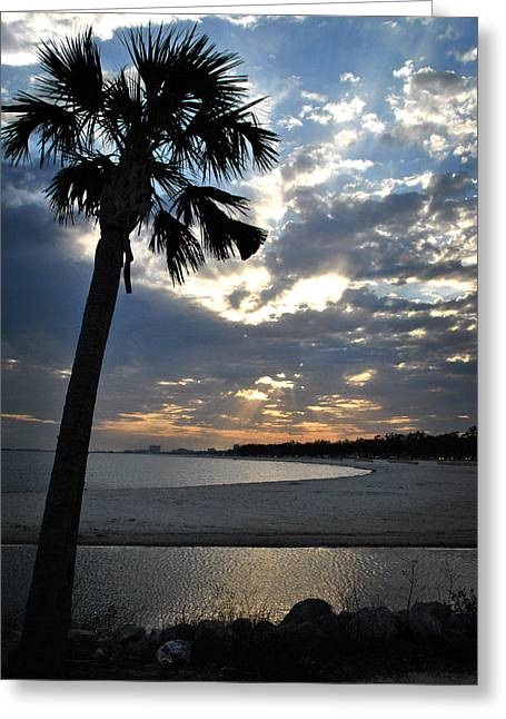 Palm And Sky Greeting Card
