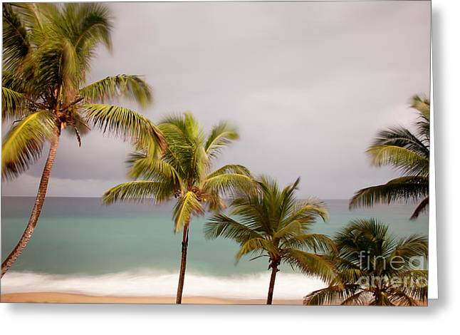 Greeting Card featuring the photograph Palm Beach by Jo Ann Tomaselli