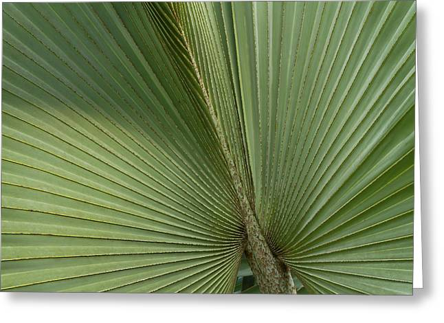 Palm, Belize Botanic Garden Greeting Card by William Sutton