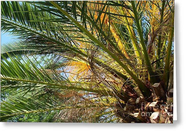 Palm Canopy Greeting Card