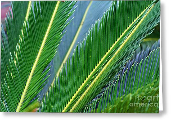 Palm Cycas Fronds Greeting Card