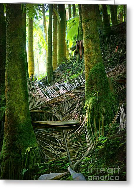 Greeting Card featuring the photograph Palm Forest by Ellen Cotton