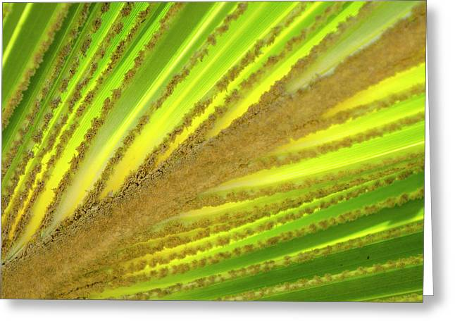 Palm Frond In Na Aina Kai Botanical Greeting Card