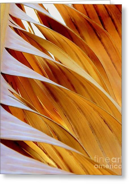 Palm Frond Greeting Card by Ranjini Kandasamy