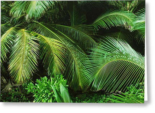 Palm Fronds And Green Vegetation Greeting Card by Panoramic Images