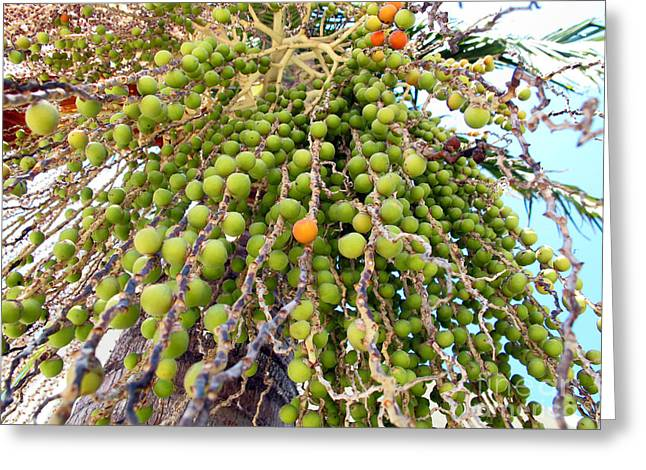 Palm Grapes Greeting Card