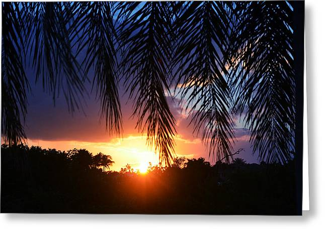 Palm Horizon Greeting Card by Laura Fasulo