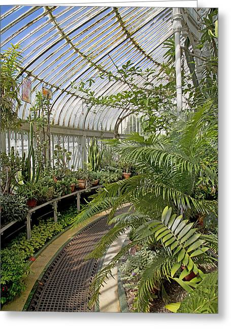 Palm House Belfast Ireland Greeting Card