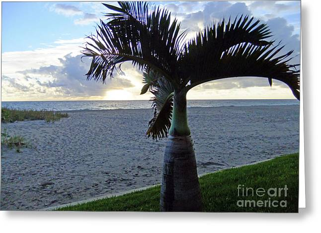 Palm In The Morning Greeting Card