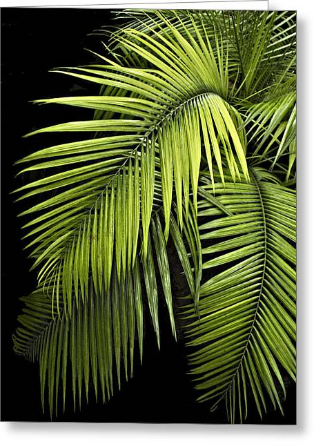 Palm Leaves Greeting Card by Judy  Johnson