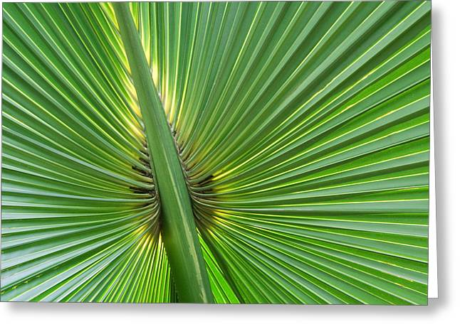 Greeting Card featuring the photograph Palm Love by Roselynne Broussard