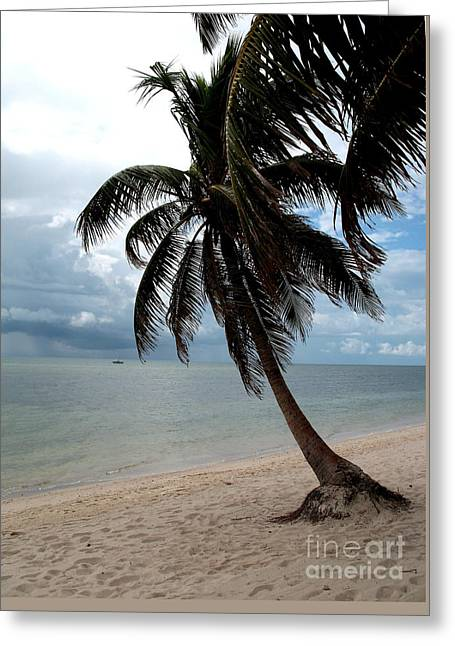 Palm On The Beach Greeting Card by Christiane Schulze Art And Photography