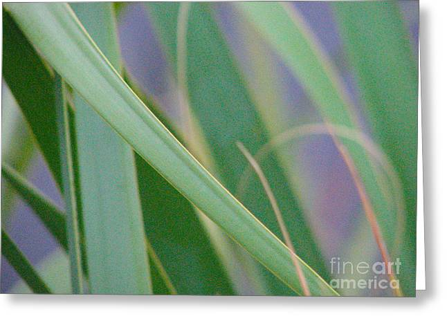 Greeting Card featuring the photograph Palm Reeds by Val Miller