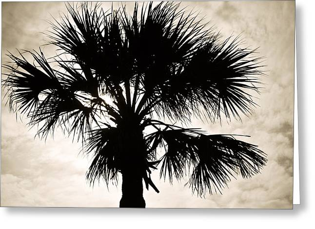 Palm Sihlouette Greeting Card by Marilyn Hunt